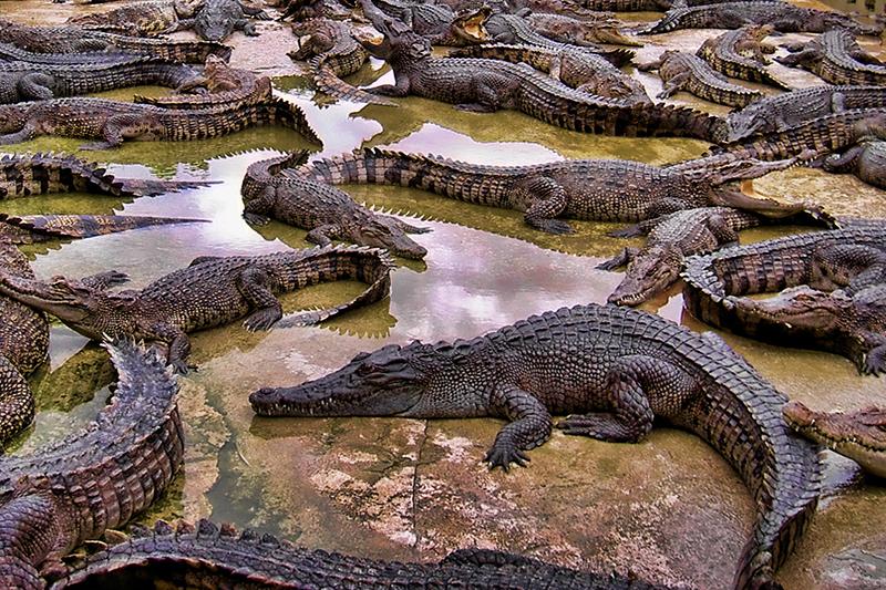 Крокодиловая ферма и сад древнейших камней