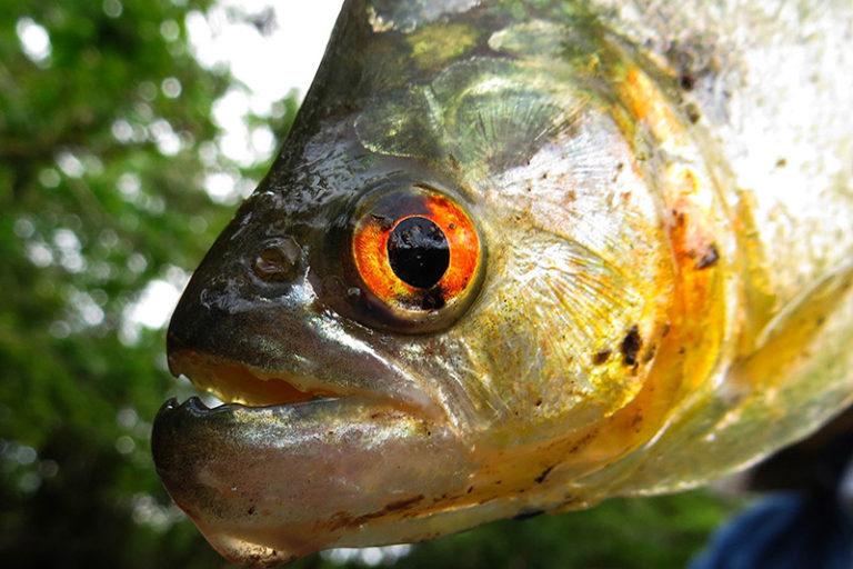 Рыбалка на озере в Паттайе