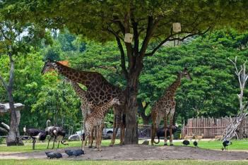 Зоопарк Кхао Кхео в Паттайе ( Khao Kheo open zoo )