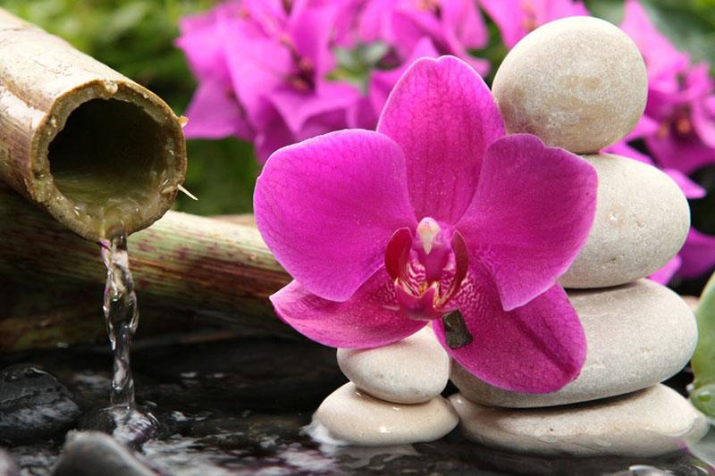 Орхидея Спа