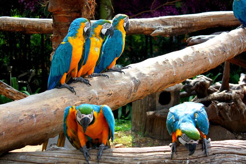 Сафари парк (Safari World)